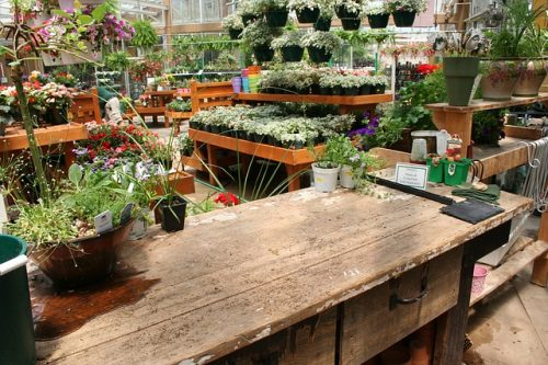 Garden centre, plants, flowers